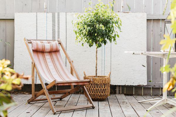 ficus tree on a patio