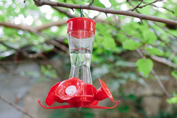 hummingbird feeder hanging from a tree branch