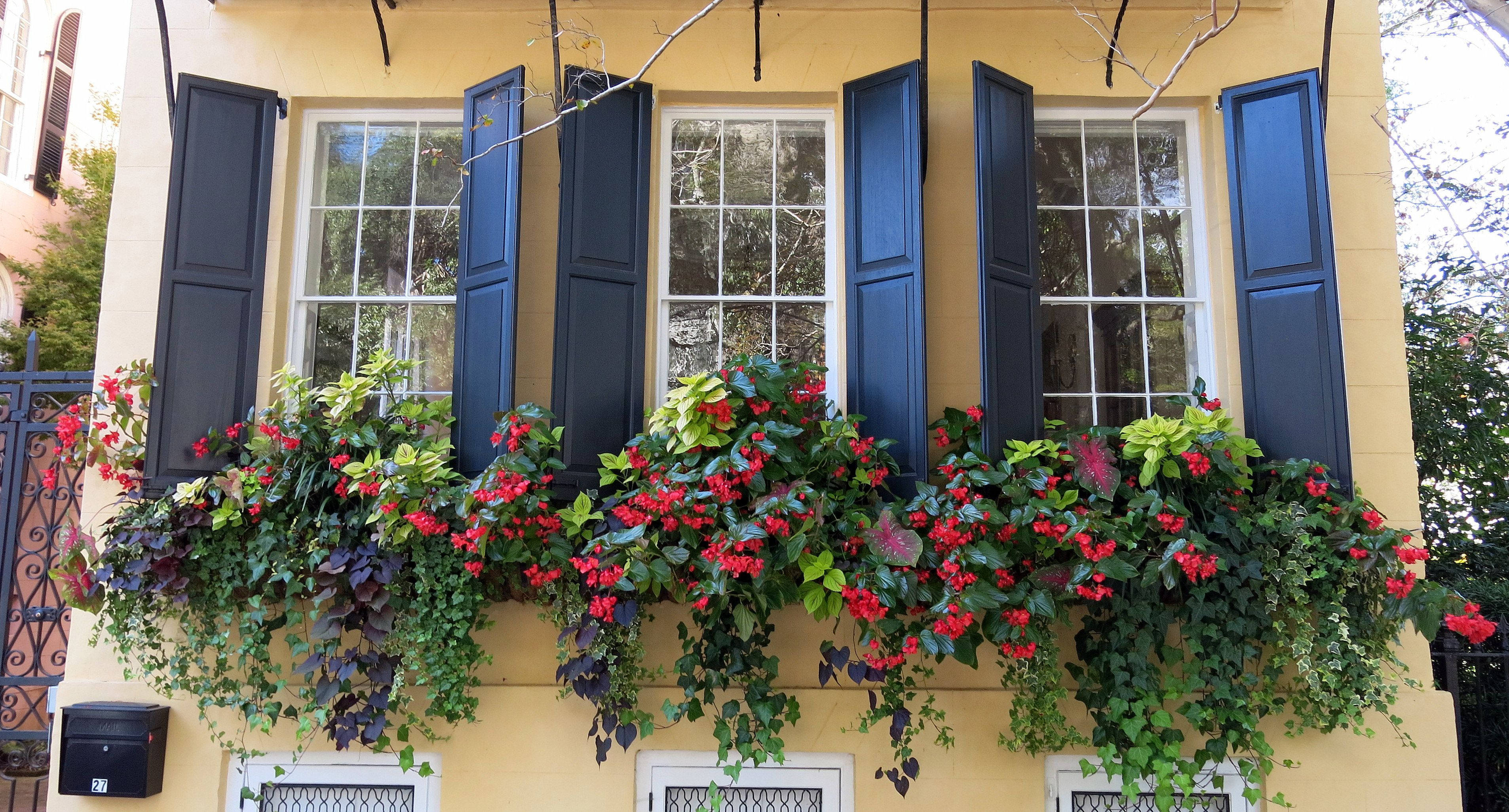 Window Box Trailing Plants