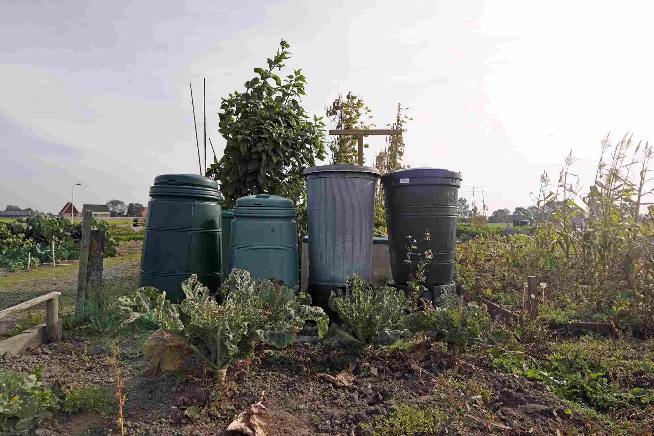 Compost bins in a vegetable garden