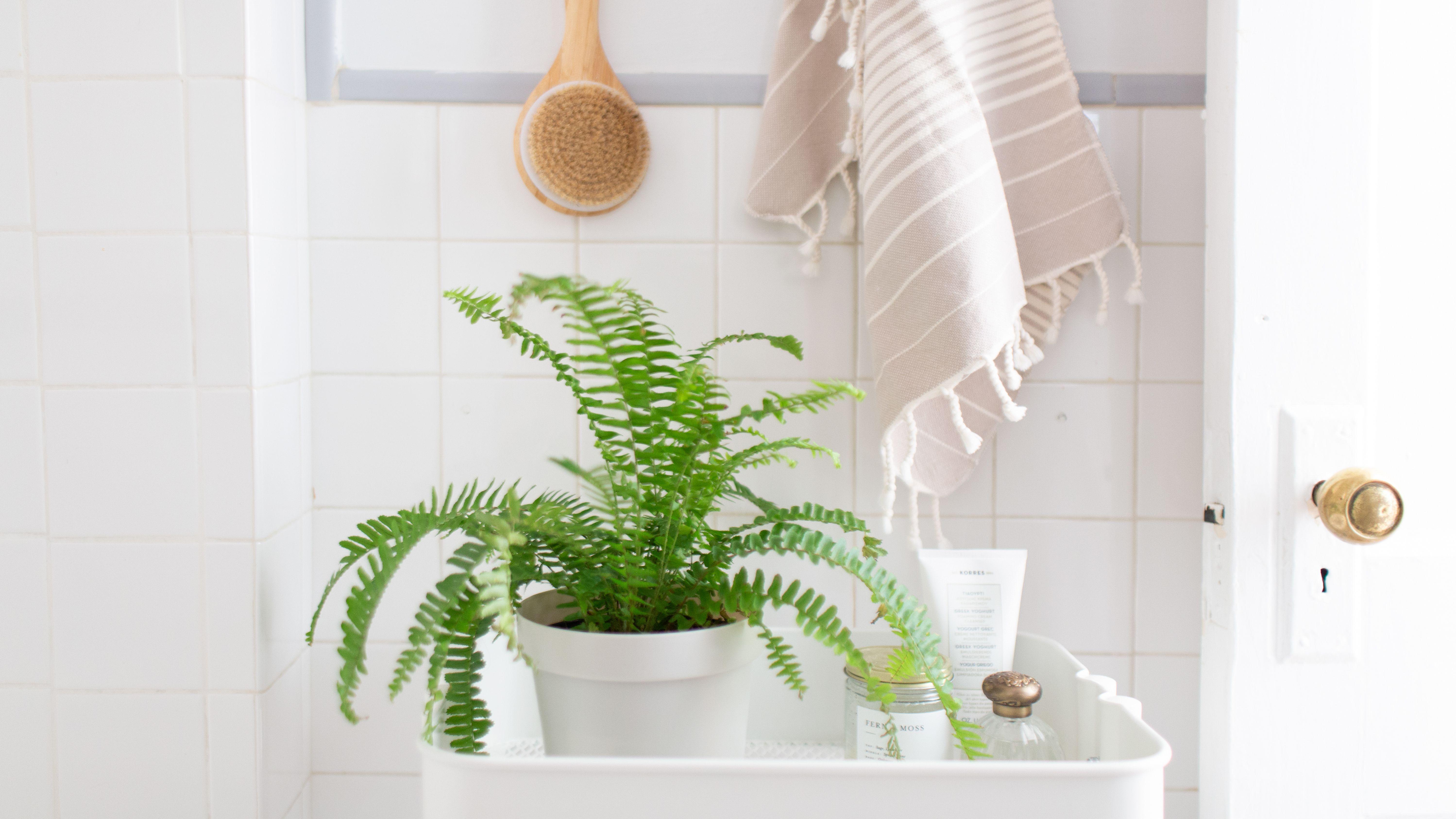 17 Best Houseplants For Your Bathroom
