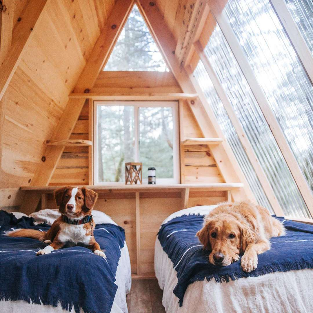 Cabin with two dogs in bed
