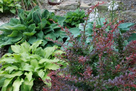 How to Plant, Grow, and Maintain Hostas