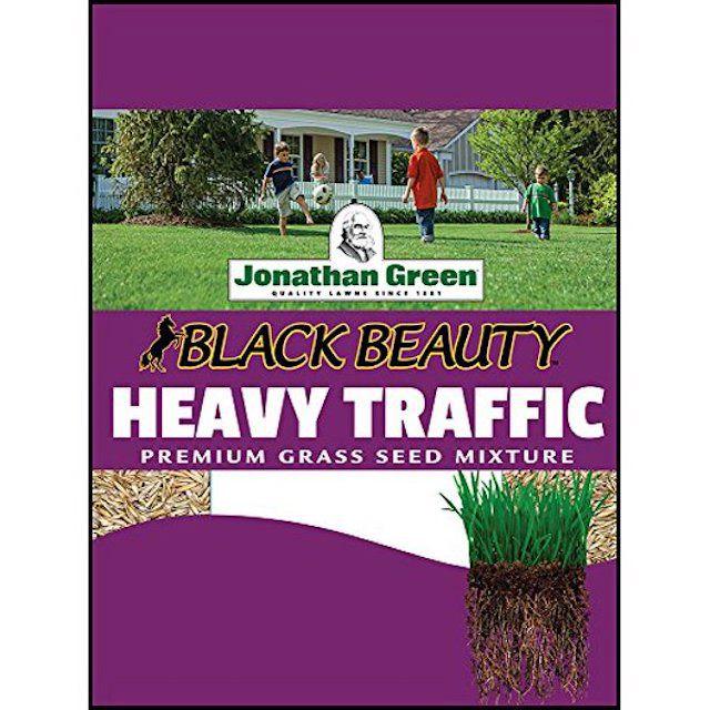 Heavy Traffic Grass Seed