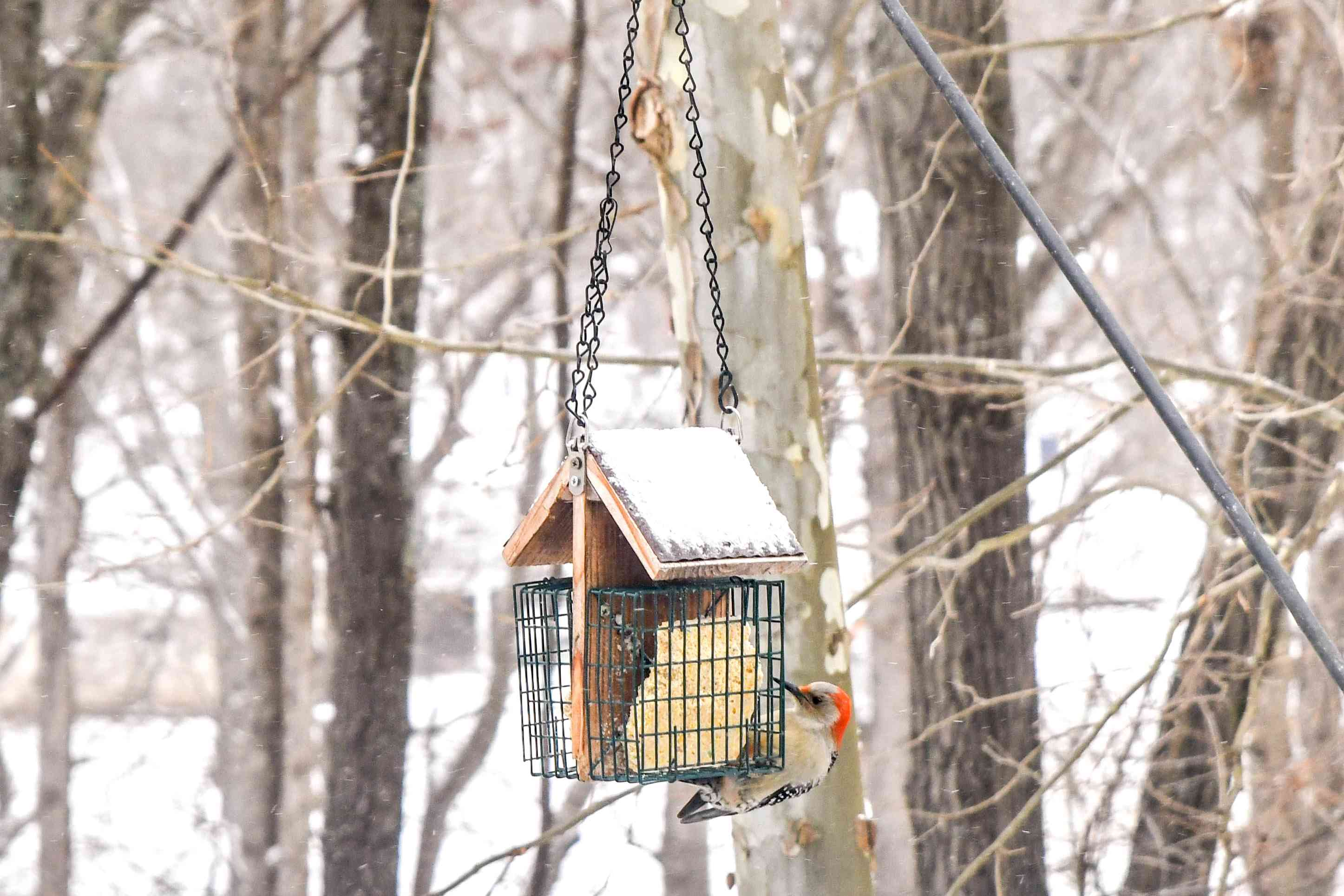 Bird feeder hanging with red-headed woodpecker eating from seed pack in front of snow-covered trees