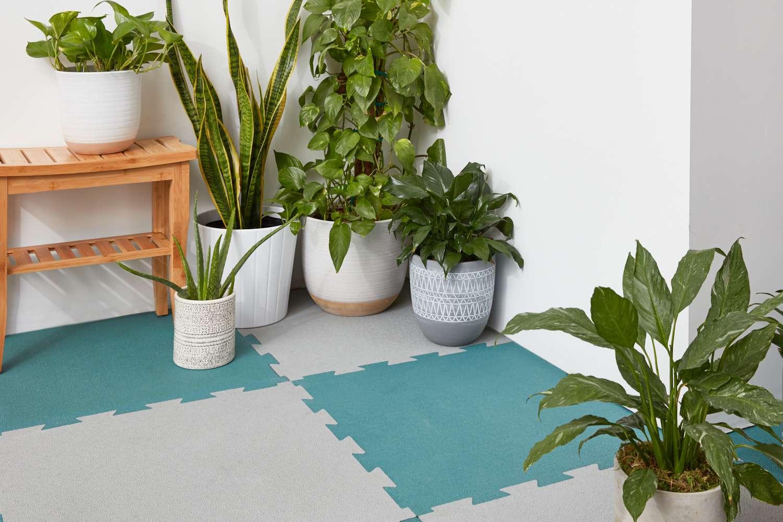 Plants on Rubber Floor