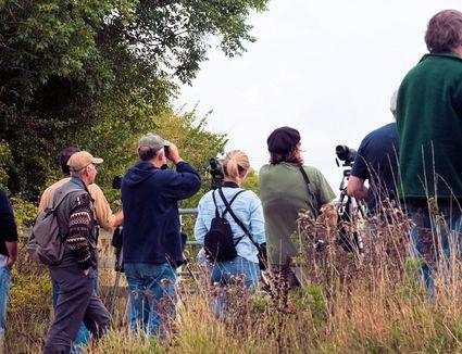 Birders in the Field