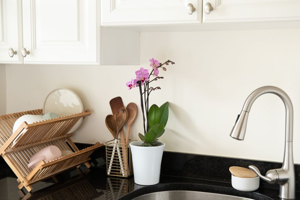 an orchid on a kitchen counter