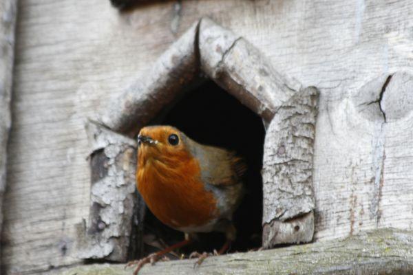 Bird standing in birdhouse door