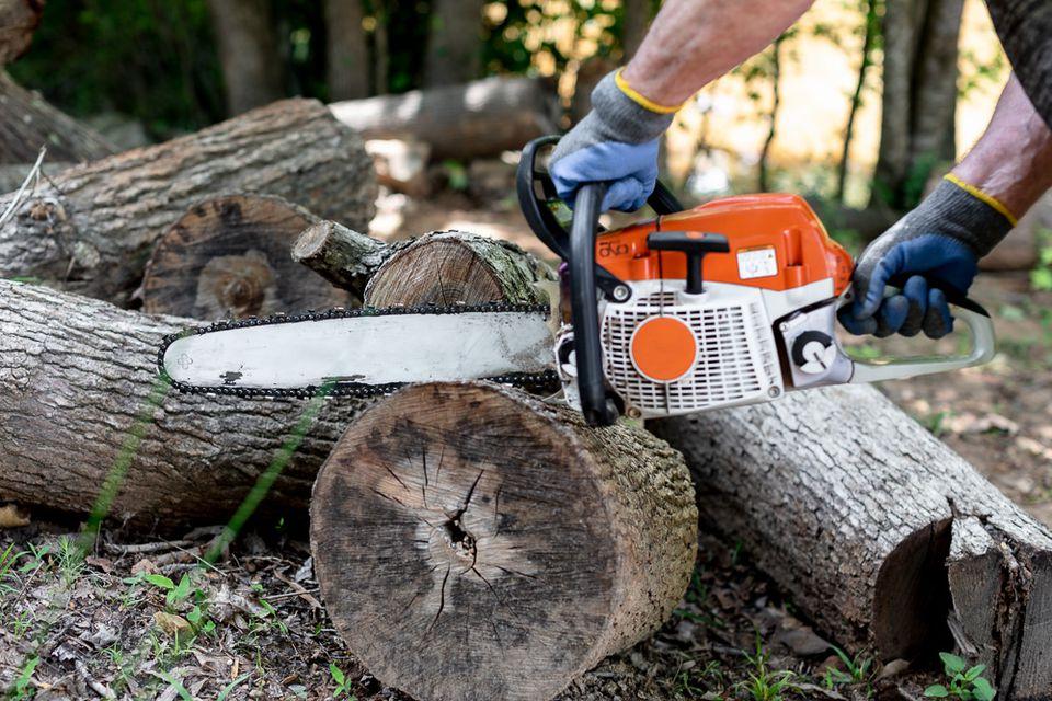 Chainsaw cutting tree trunk logs