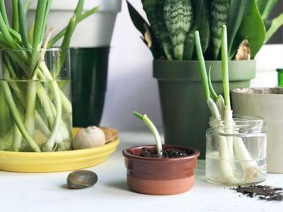 plants growing on a sunny windowsill
