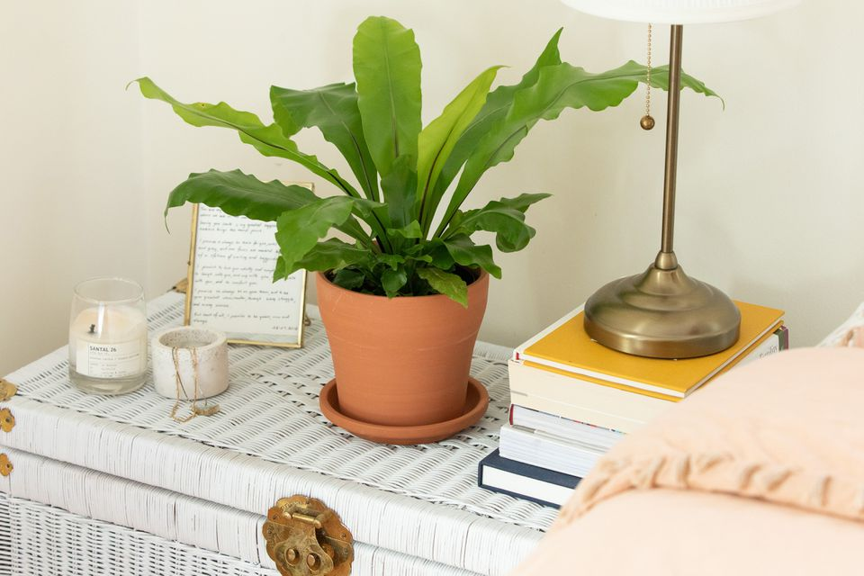 Bird's nest fern on a bedside table