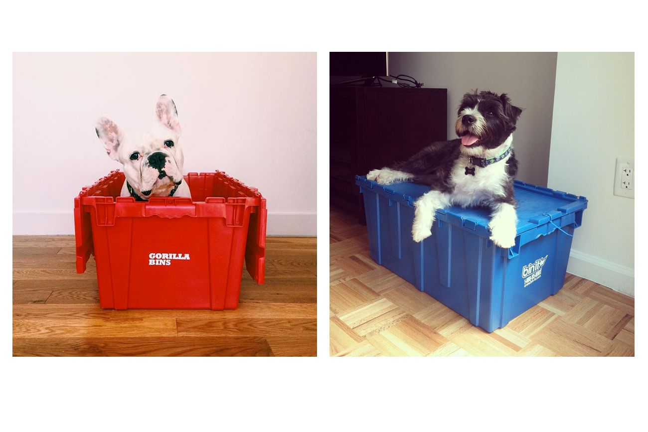 Dogs in plastic moving bins