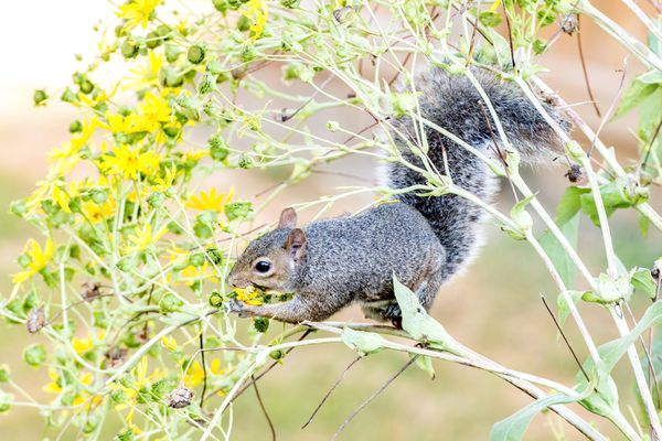 squirrel eating plants