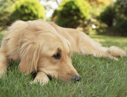 How To Keep Dogs Away From Yards