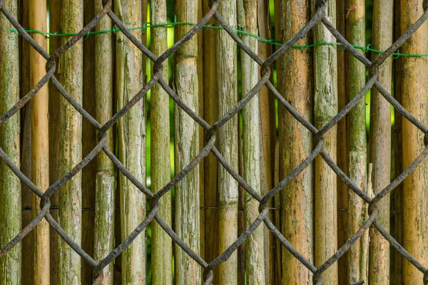 Bamboo Fence Over Chain-Link Fence