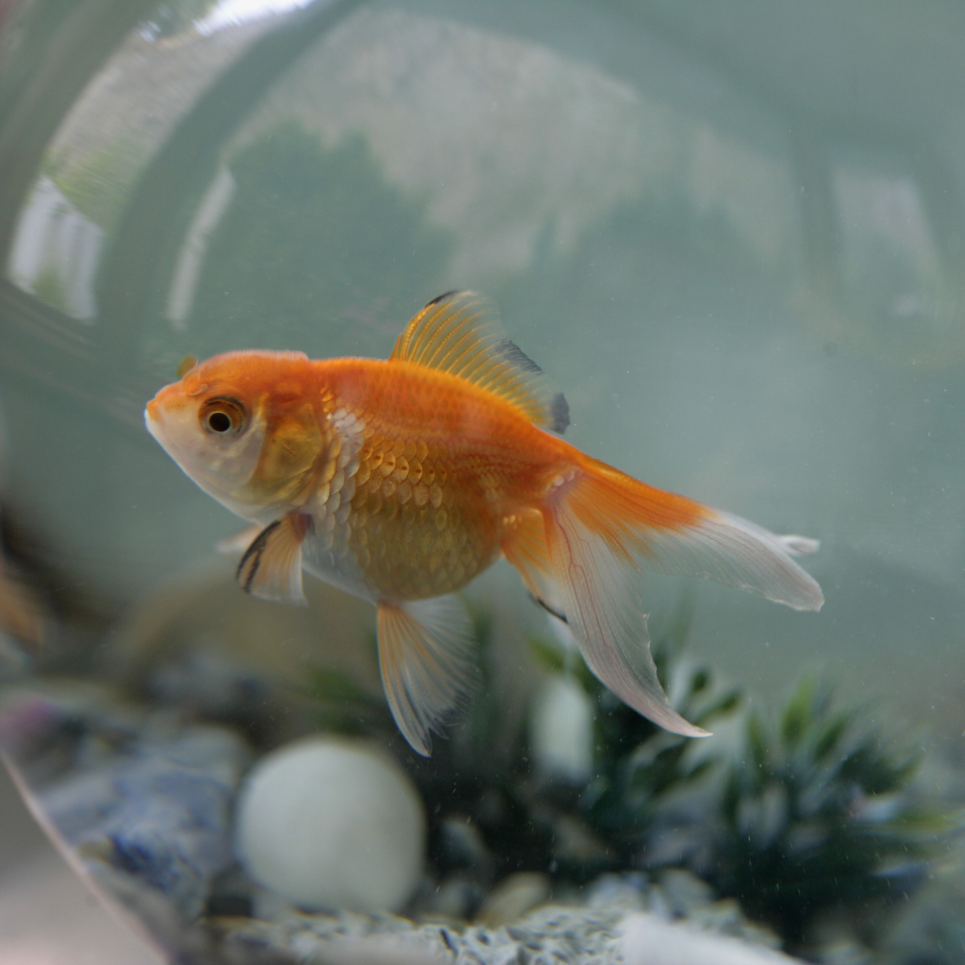 The Symbology Of Fish And Water In Feng Shui