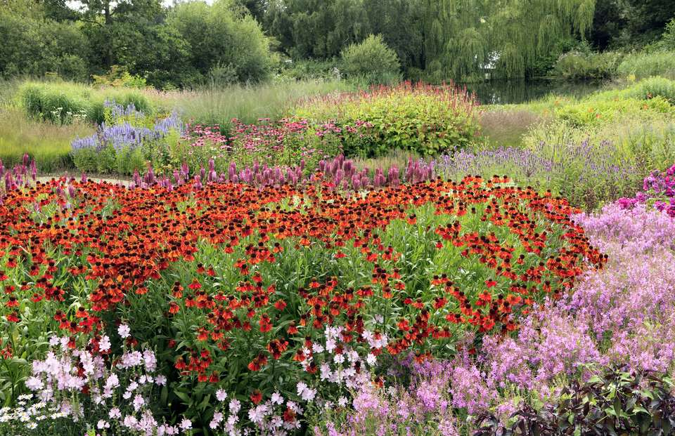 Large Drifts of Perennial Flowers