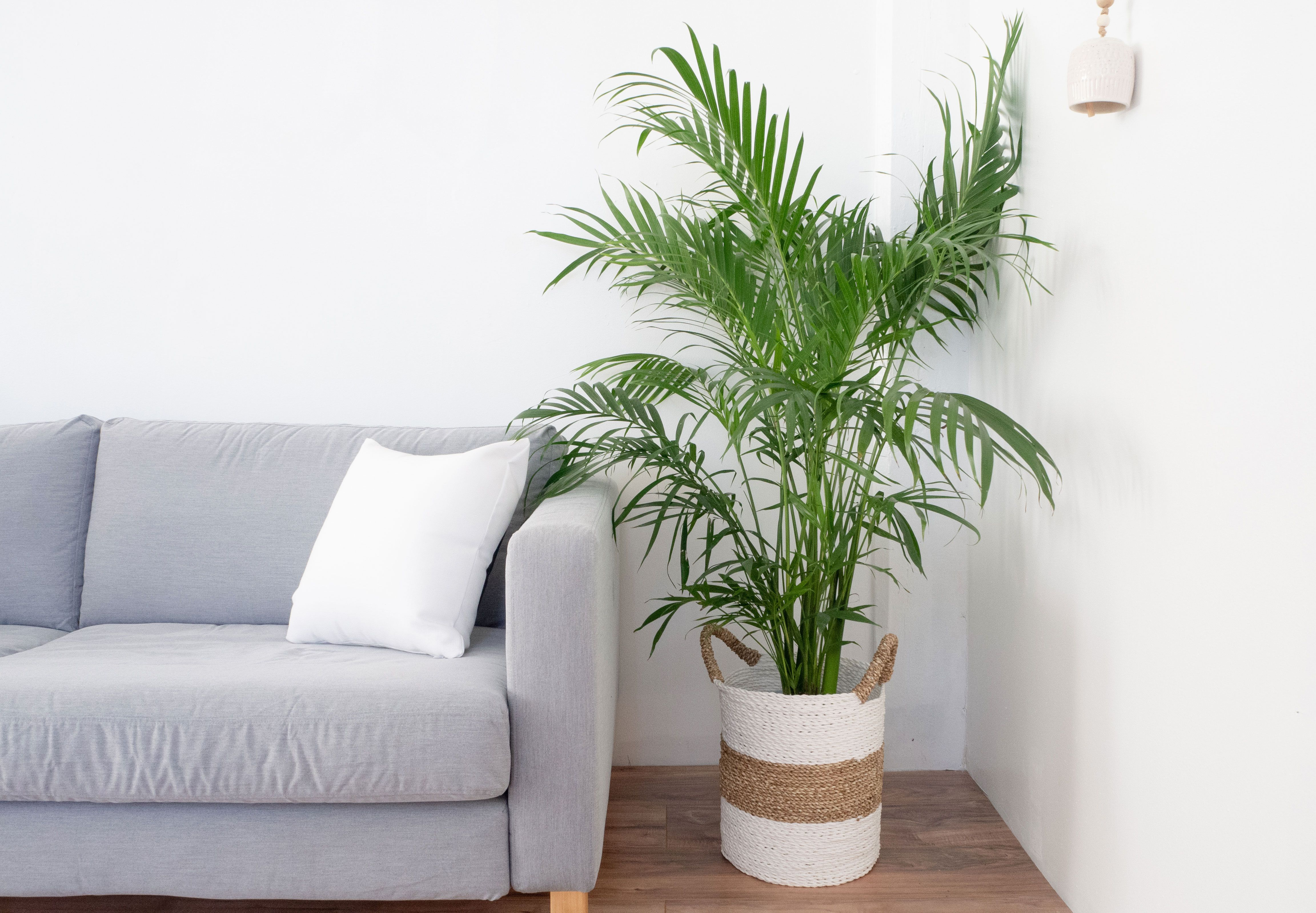How To Grow And Care For An Indoor Palm