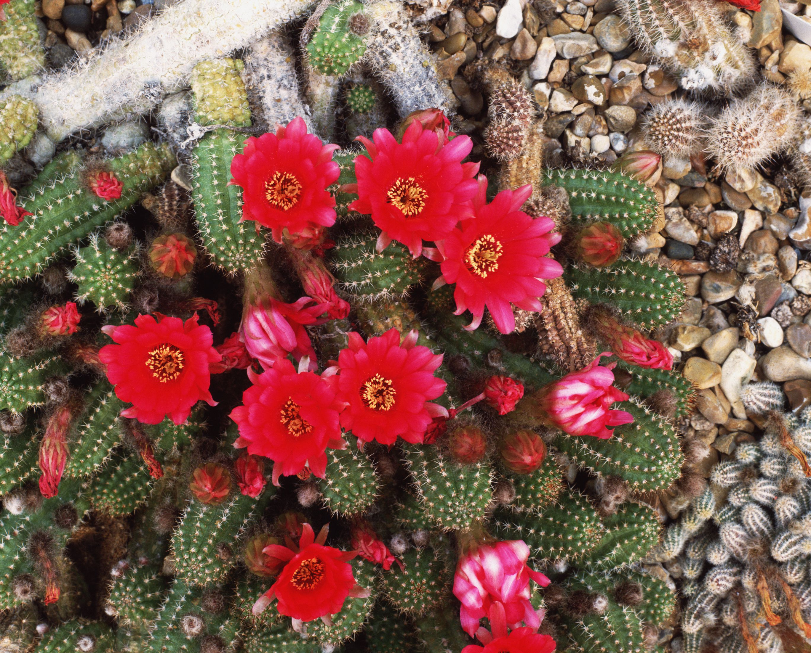 The Best Types Of Cactus To Grow In Your Garden