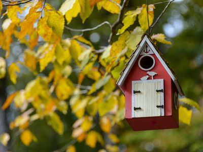 How To Create A Safe Bird House Build the right size house and hole dimensions. how to create a safe bird house