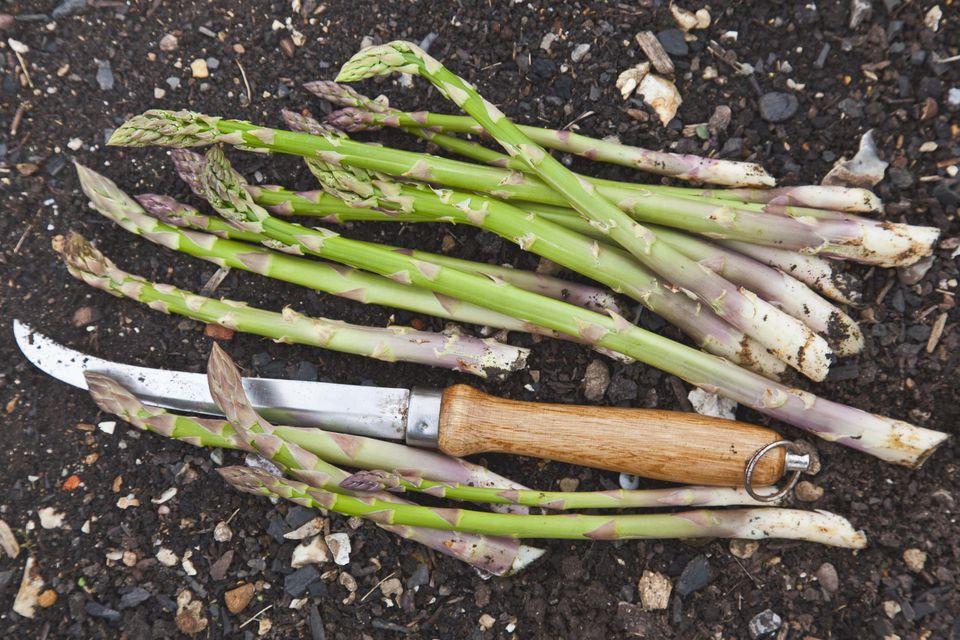 Freshly cut asparagus