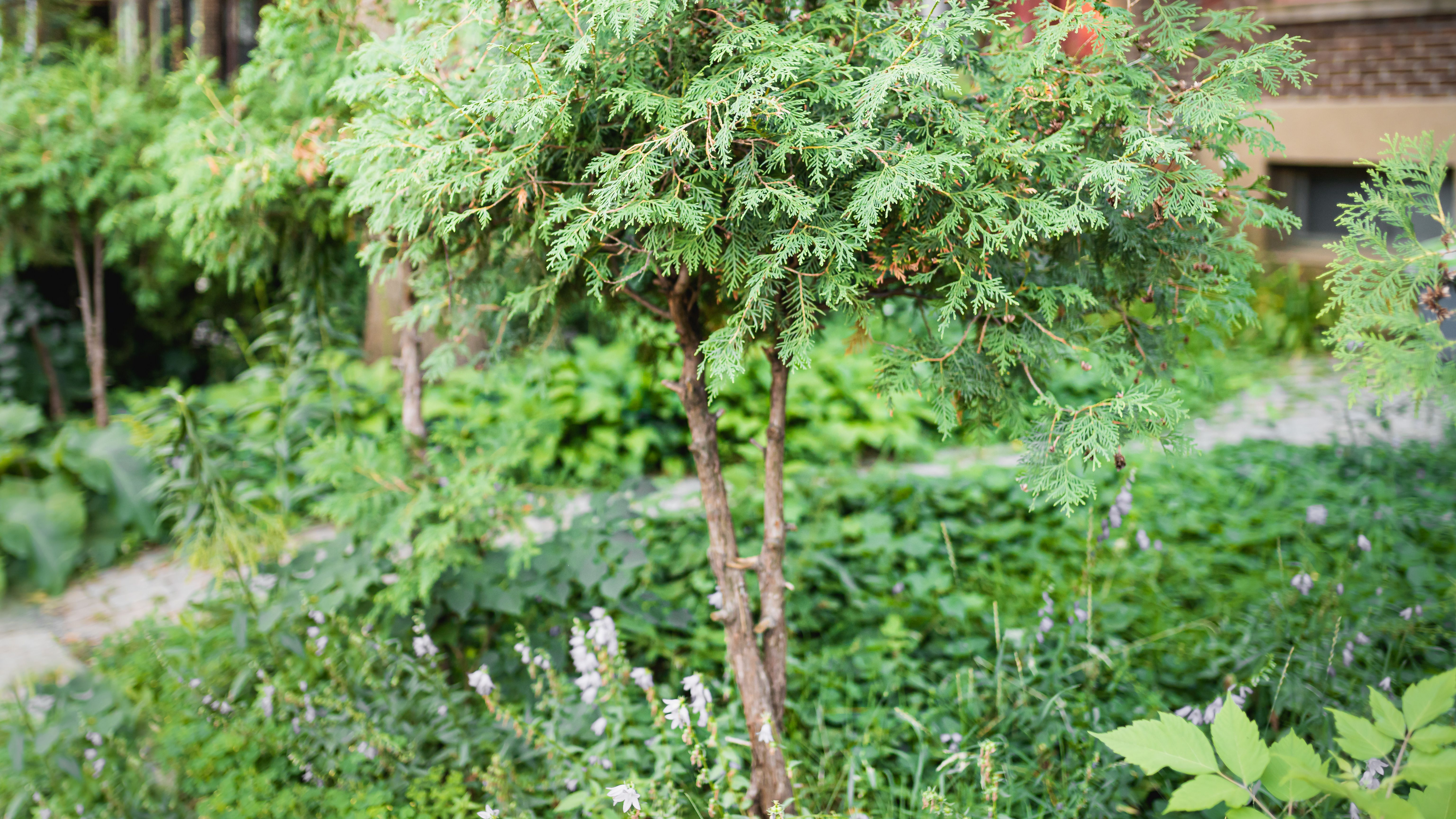 18 Best Small Trees For Tiny Yards