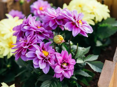 Deadheading Plants: What It Means, Why It's Important