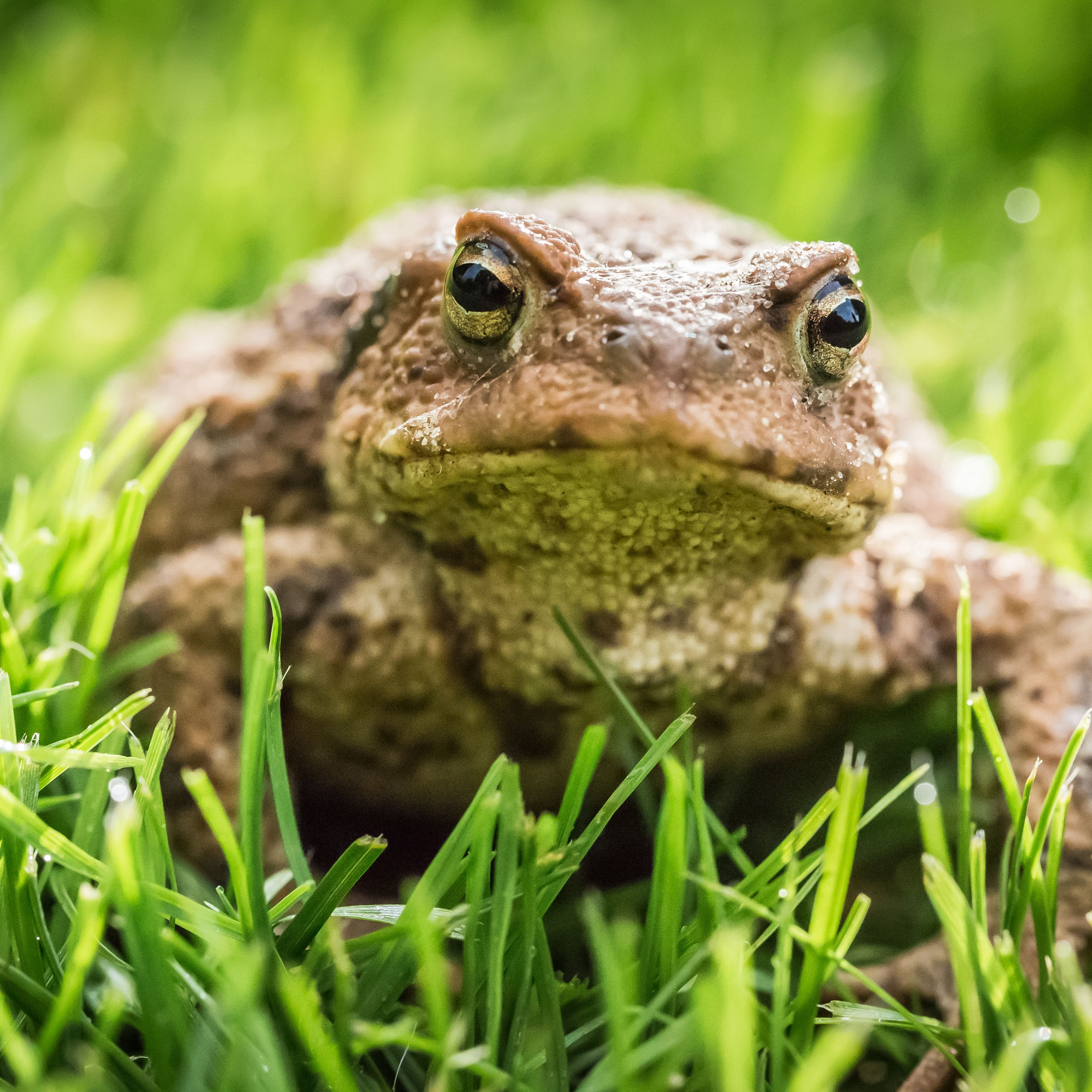 Rid Your Yard of Bugs, Build a Toad House With These Simple Steps