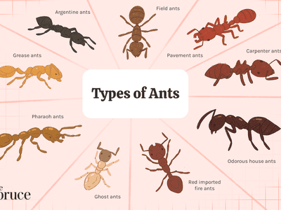 The 9 Different Types of Ants