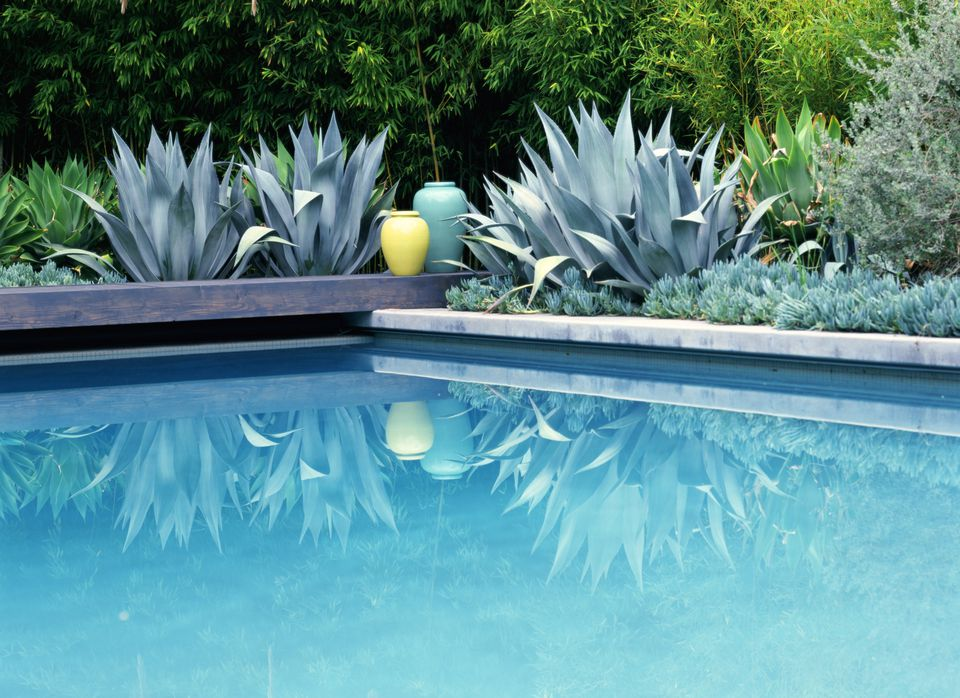 Agave Growing Near A Pool