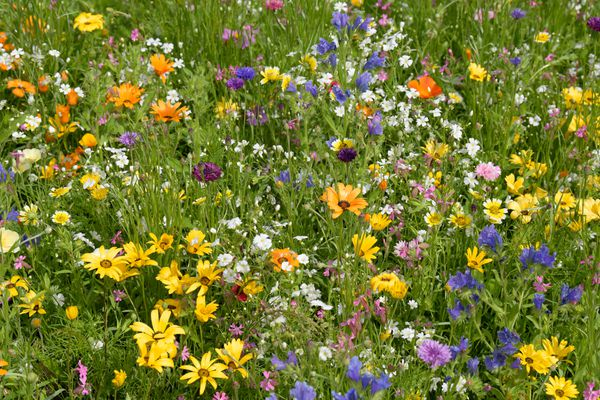 Annual and biannual flowers with yellow, orange, blue and white petals in garden