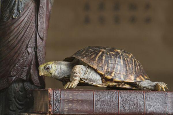 feng shui turtle