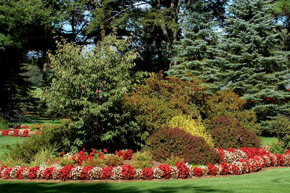 Flower borders ideas to make your landscaping sizzle photos shows begonias used to edge a border the flowers are red and white mightylinksfo