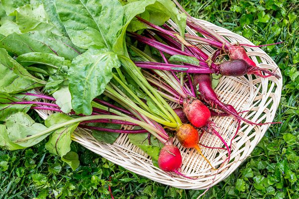 just-harvested beets