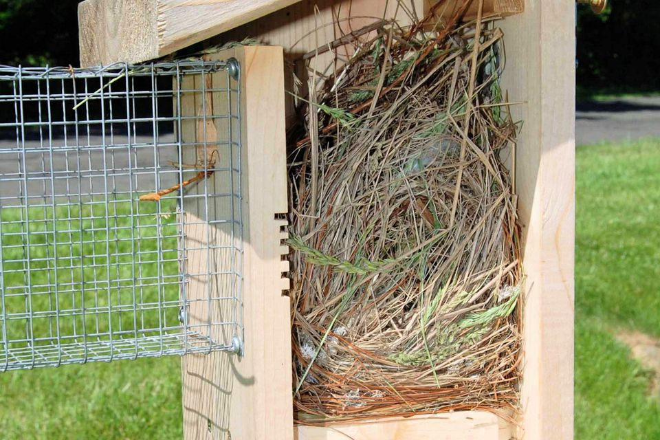 Nesting material in a bluebird house
