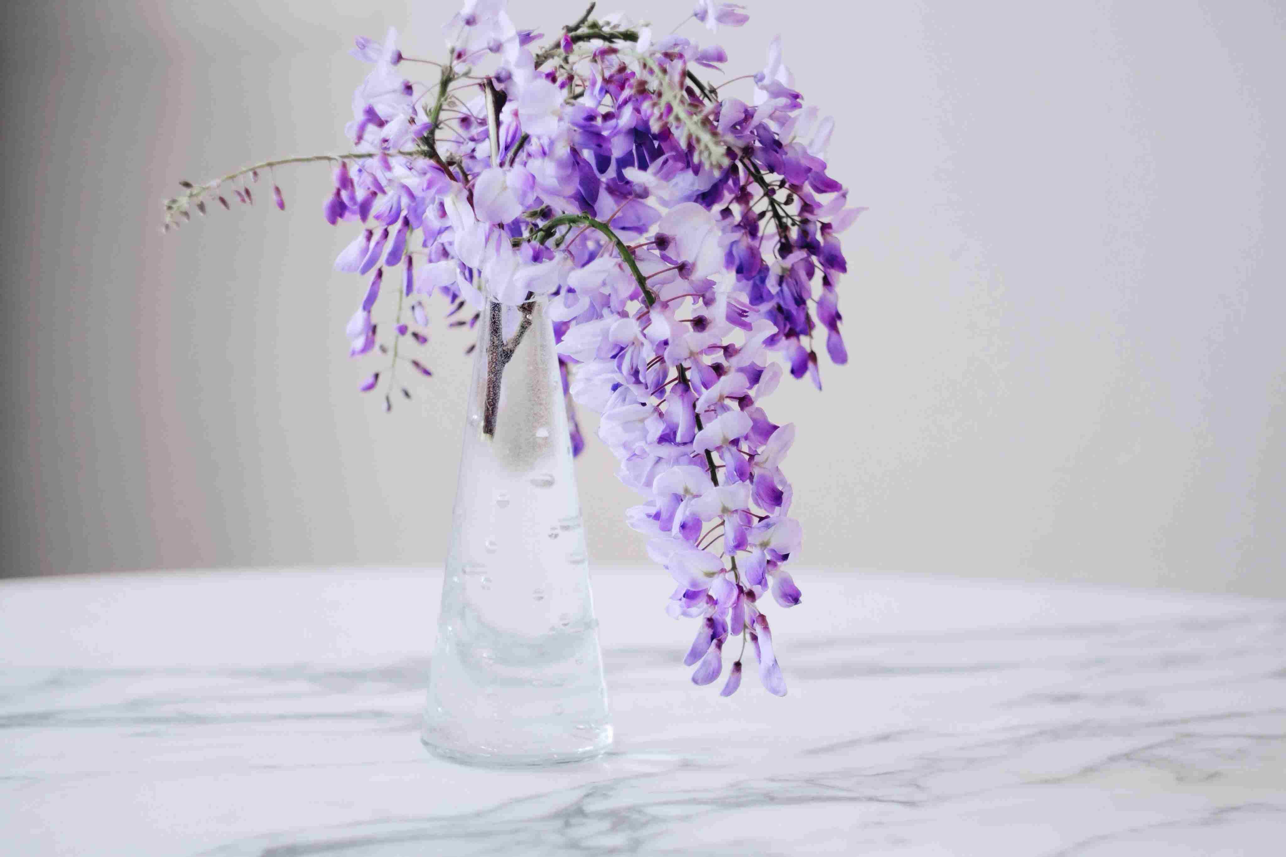 Wisteria Cut Flower