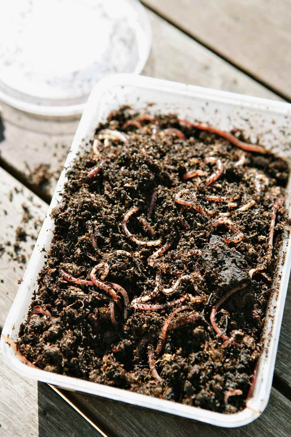 How To Set Up A Worm Bin For Vermicomposting