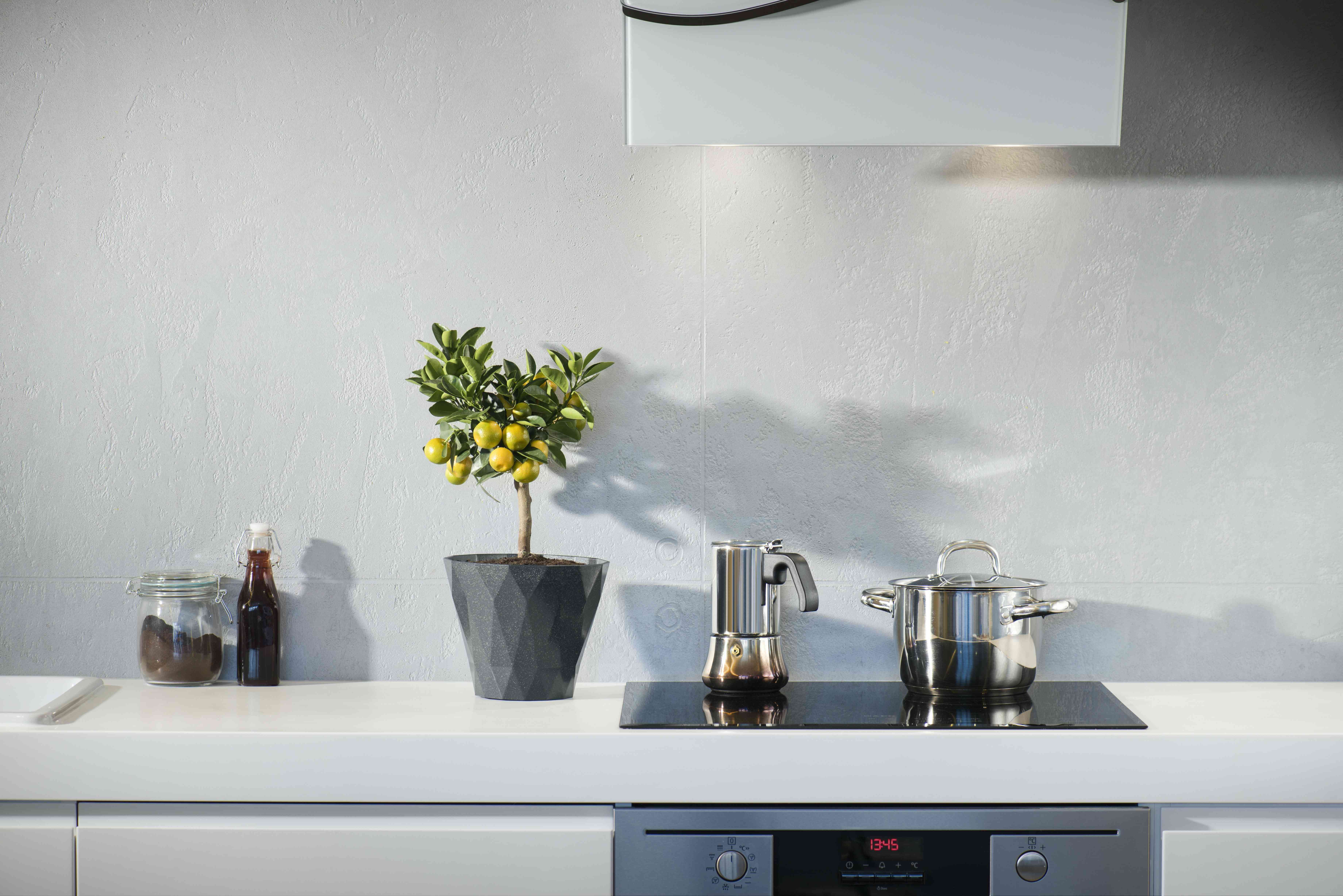 modern stove in a white kitchen with a fruit tree