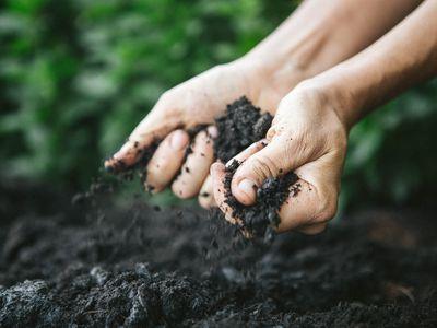 Hands holding dark soil near the ground.
