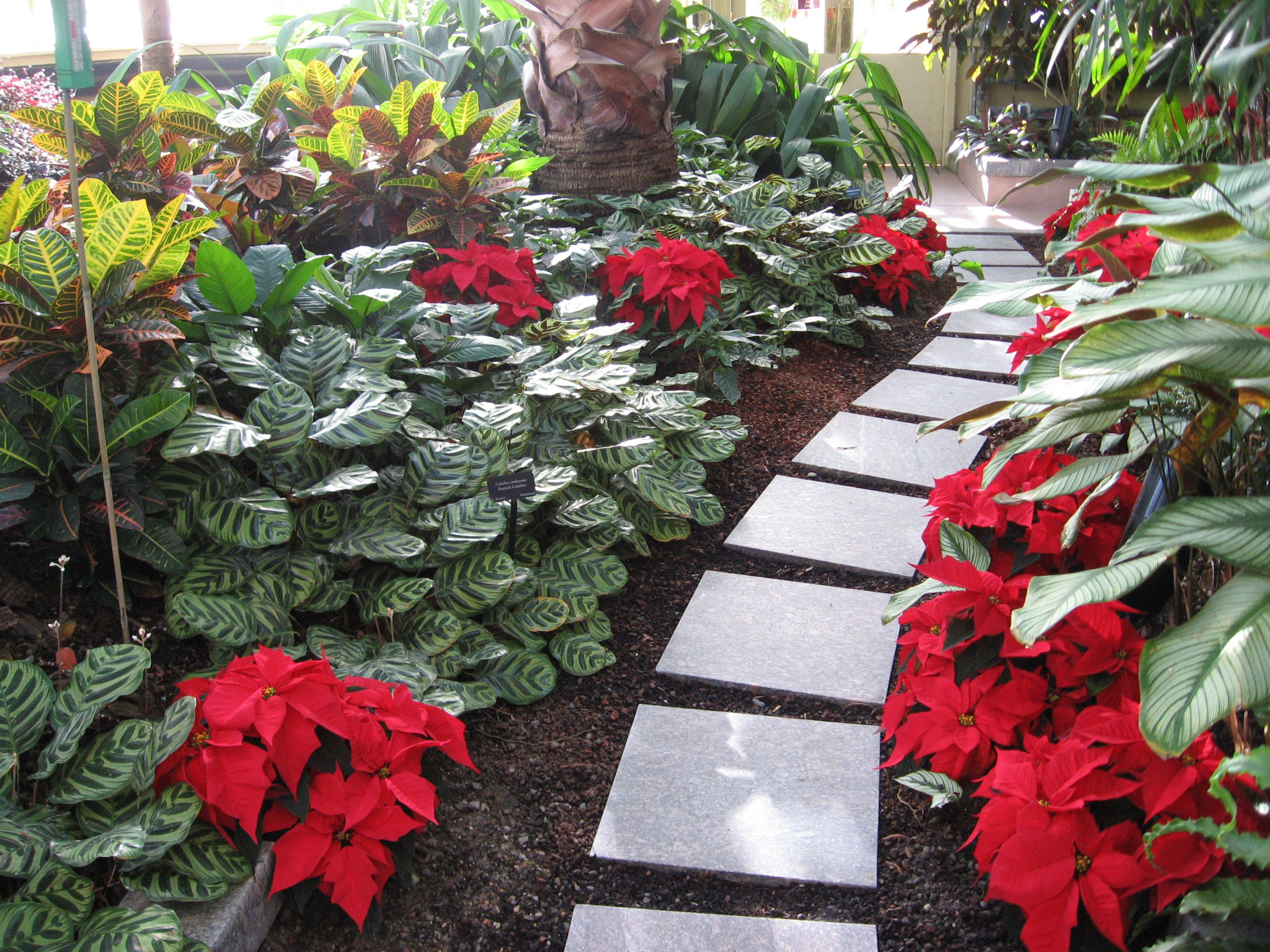 Baltimore Conservancy Poinsettia Show