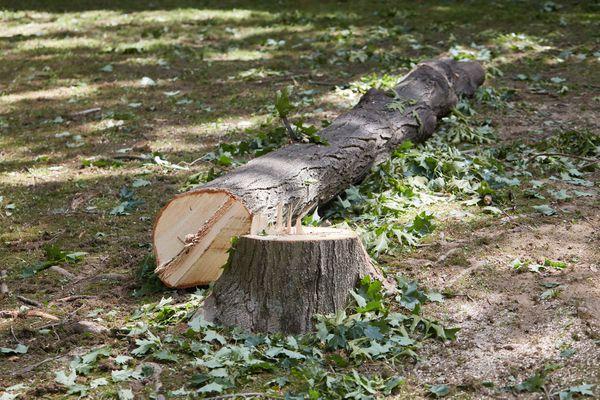 Tree trunk cut down in wooden area
