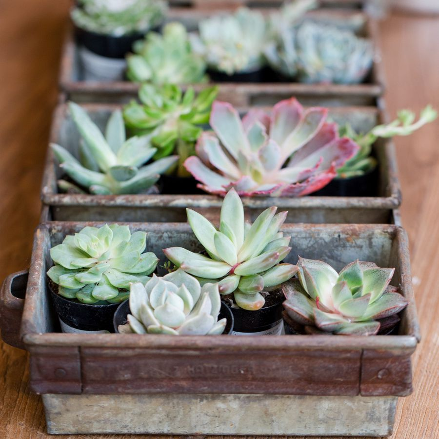 Tray of succulents