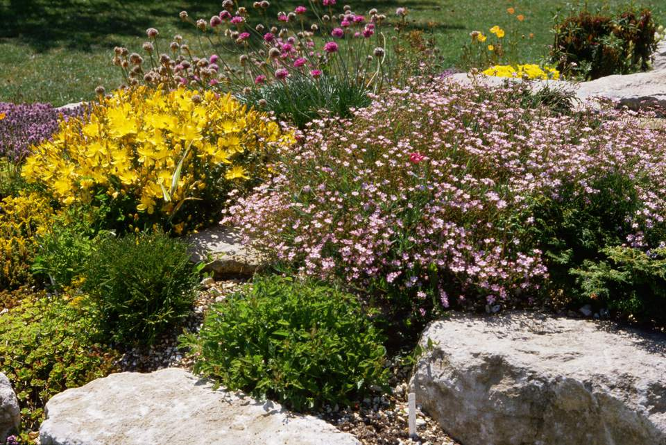 Rock garden with pink and yellow flowers.