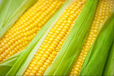How and When to Pick and Cook Sweet Corn