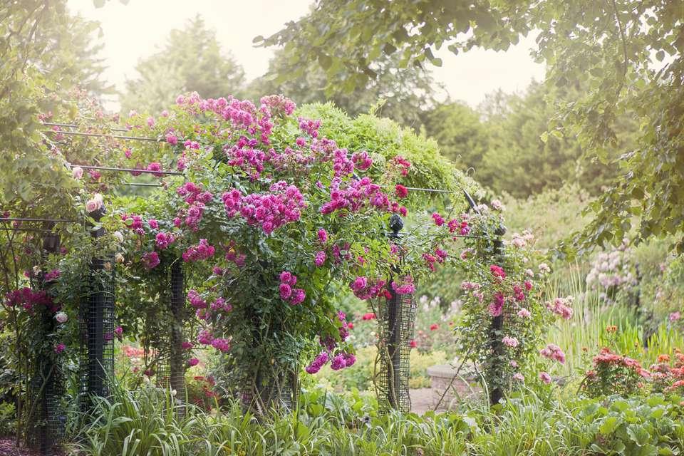 Summer Pergola with Climbing roses