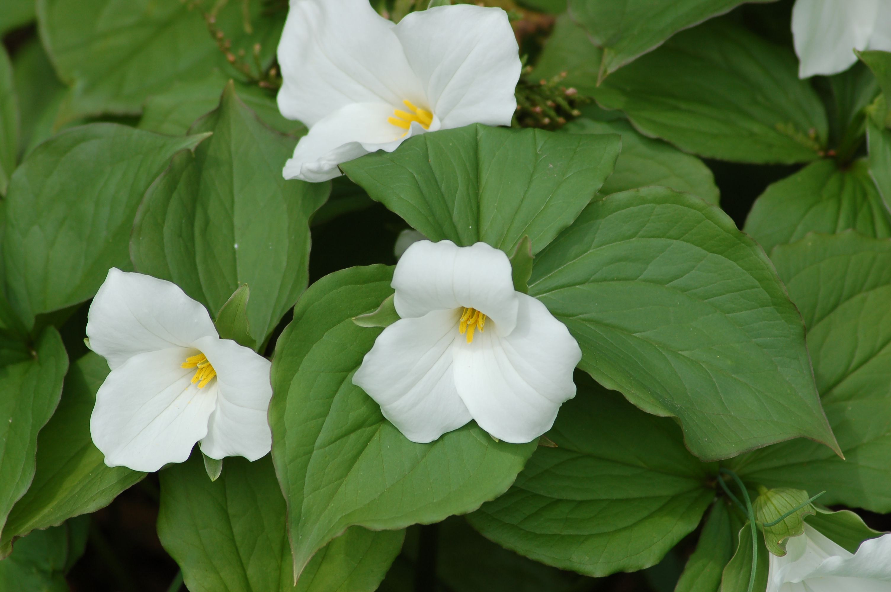 Bad Smelling Flowers And Their Use In Landscaping