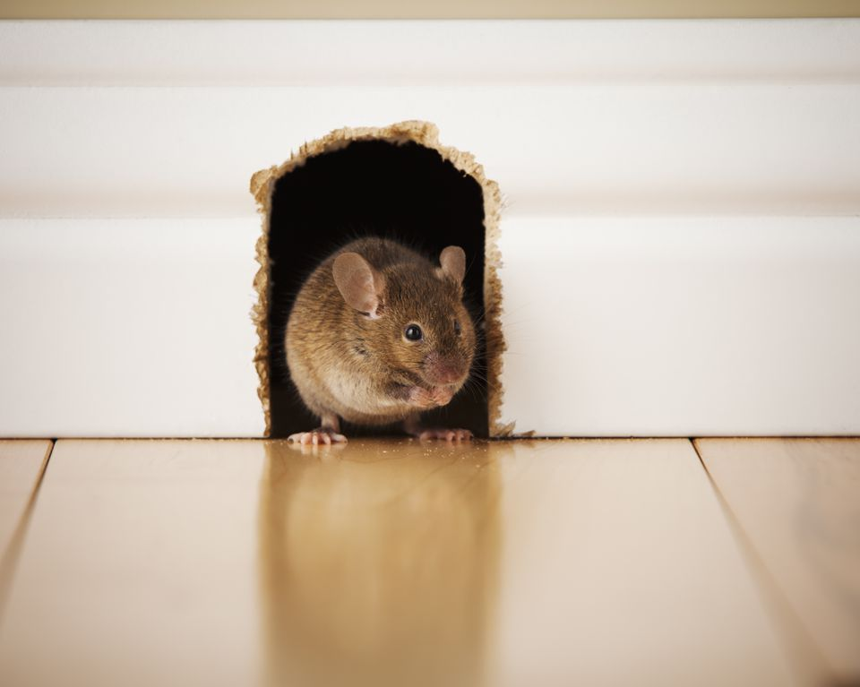 Mouse in mouse hole