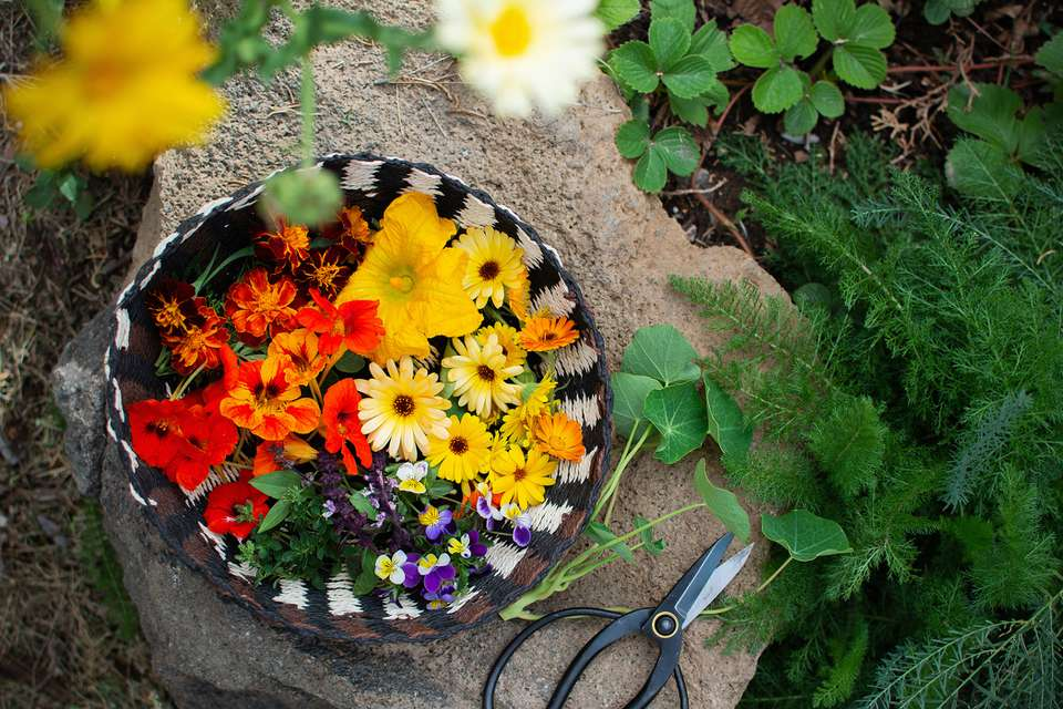 edible flowers collected in a garden