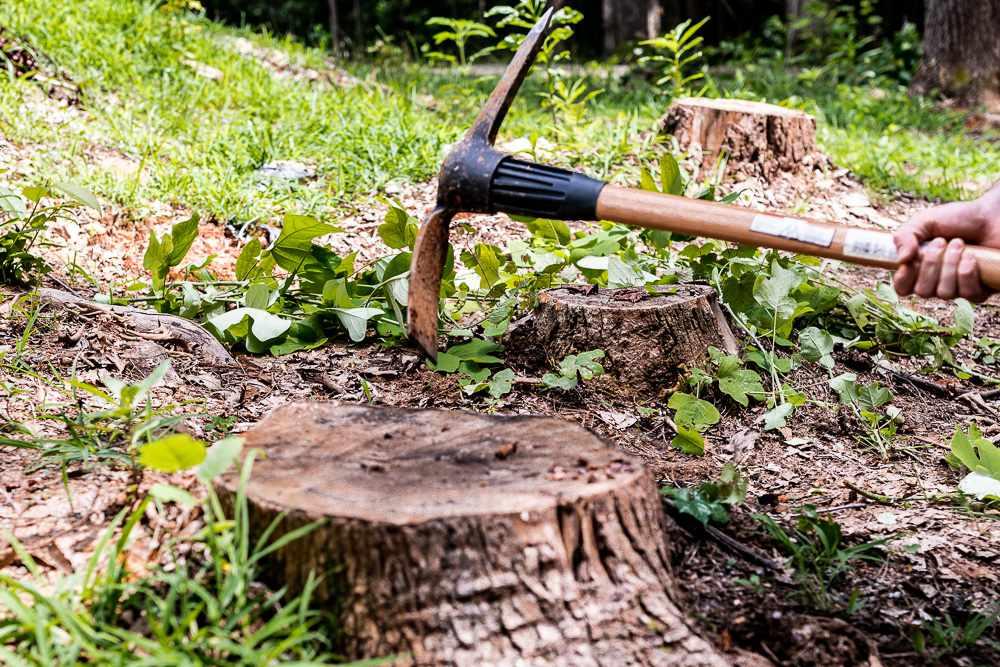 tree stump remova;